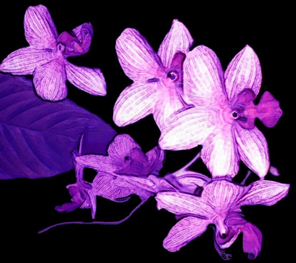 """Purple Orchids1"" by njchip123"