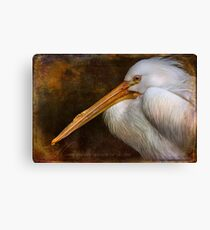 Finer Feathered Friends Canvas Print