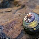 Sunset wrapped Seashell by Michelle Ricketts