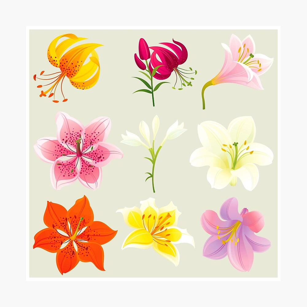Colorful Lilies Photographic Print