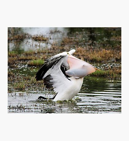 Dine and Dash ~ Pelican with full Basket of fish ~ Photographic Print