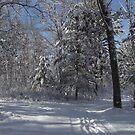 MY WINTER BACKYARD by Eric langley