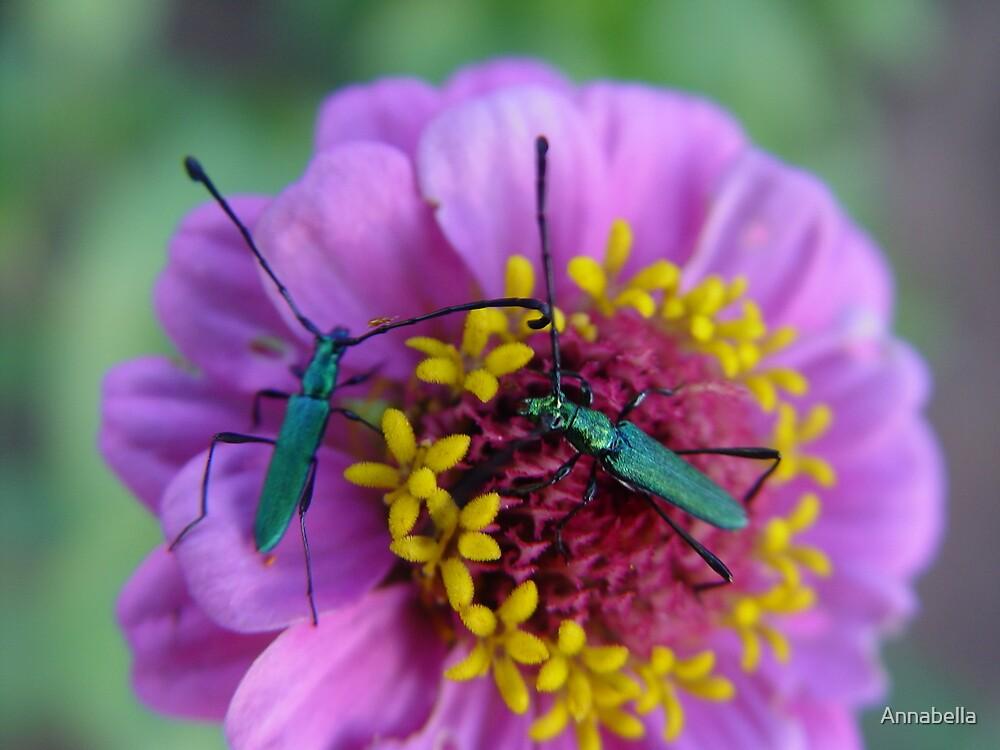 Bugs  by Annabella