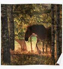 The horse and the sunset Poster