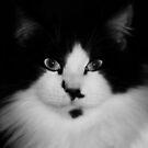 Black & White by vic321