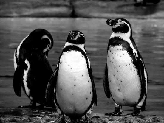 Three Penguins by Barnbk02