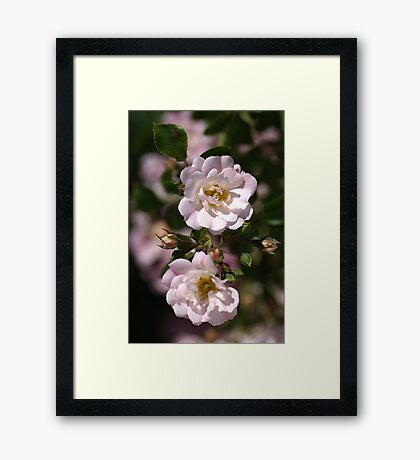 Graceful Duo Framed Print