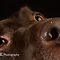 SUPER CLOSE SHOTS OF OUR BELOEVED DOGS