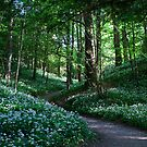 The Forest Path by mps2000