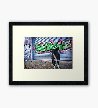 Graffiti Dog Framed Print