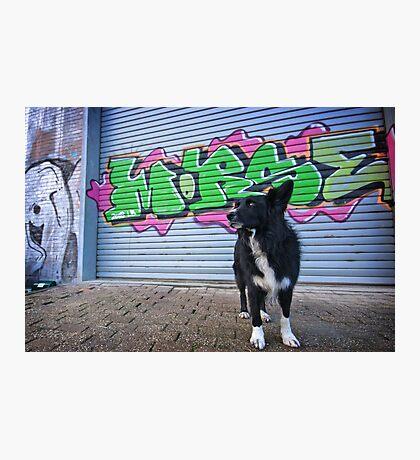 Graffiti Dog Photographic Print