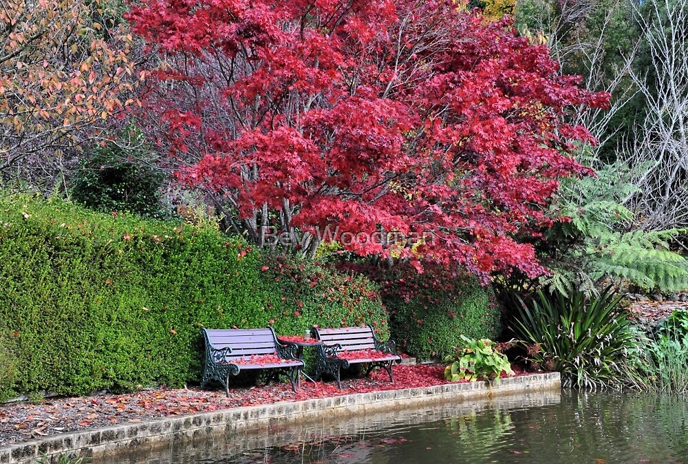 Quiet Corner - Bisley Garden - Mt Wilson NSW by Bev Woodman