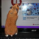redbubble hamster by Perggals© - Stacey Turner