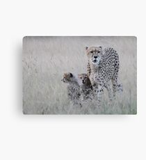 Leopard mother and cub Canvas Print