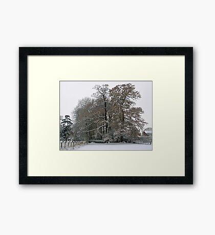 Winter Trees Framed Print