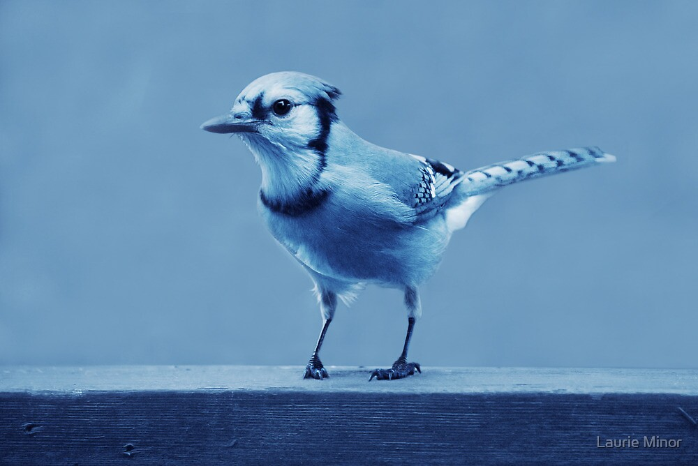 """""""I am Not pigeon toed.."""" ;) by Laurie Minor"""