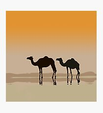 Dromedary camels and a mirage Photographic Print