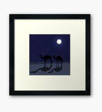 Dromedary camels in Sahara desert night Framed Print