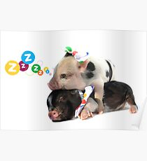 2 MICRO PIGS CUDDLING Poster