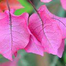 PINK FLOWER  by amar singh