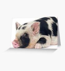 Spotty Micro pig chilling Greeting Card