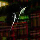 The Stylish Bug - 2 by Jim Haley