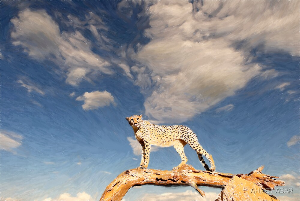 Basecamp Cheetah by MotionAge Media