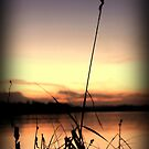 Reeds after sunset by Chris Cherry