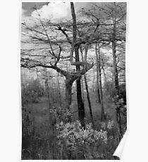 Black and White Swamp Poster