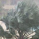 A little rain in Trinidad by DeborahDinah