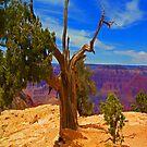 Grand Canyon Tree iPad Case by ipadjohn