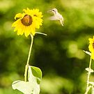 Humming Sunflower by Mary Carol Story