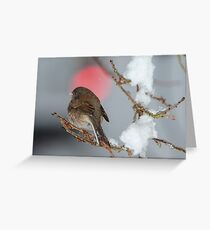 Sparrow in the Snow Greeting Card