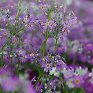 Purple Bunches of Happiness by R-Walker