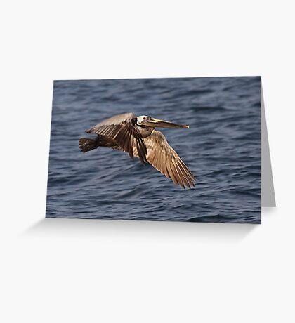 Brown Pelican In Flight Greeting Card