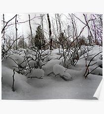 Winter moor Poster