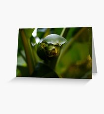 Green colour Greeting Card