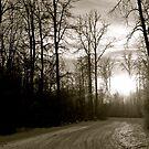 Trees in black and white Alberta Canada by Jessica Chirino Karran