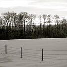 Winter Landscape B&W Alberta, Canada by Jessica Chirino Karran