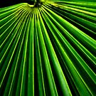 The Frond by Jim Haley