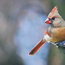At the feeder by Penny Fawver