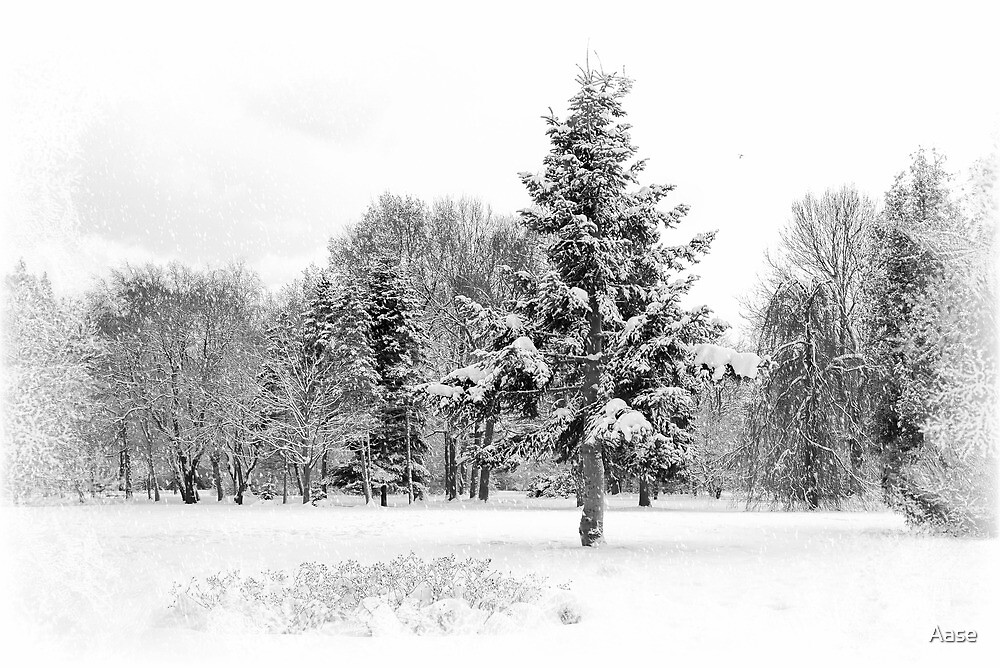Winter by Aase