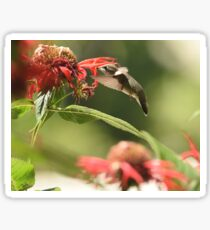 Nectar Seeker Sticker