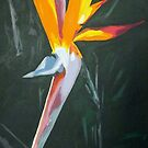 bird of paradise by dave reynolds