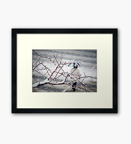 One Morning in Montreal Framed Print
