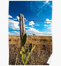 Cactus and fence Poster