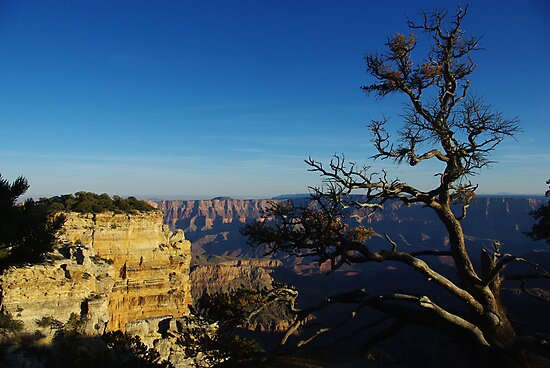 North Rim, Grand Canyon by Claudio Del Luongo