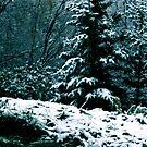 First Snow by Erin Scott