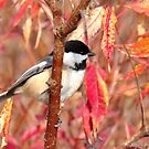 Chickadee in Sumac by Nancy Barrett
