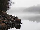The Mist by Dana DiPasquale